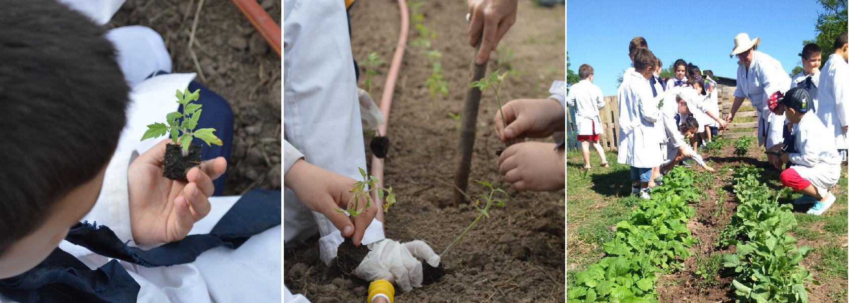Desde la semilla: unimos esfuerzos con la escuela de La Paz para la creación de una huerta